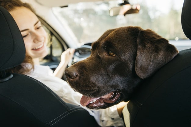 podróżowanie z psem w samochodzie